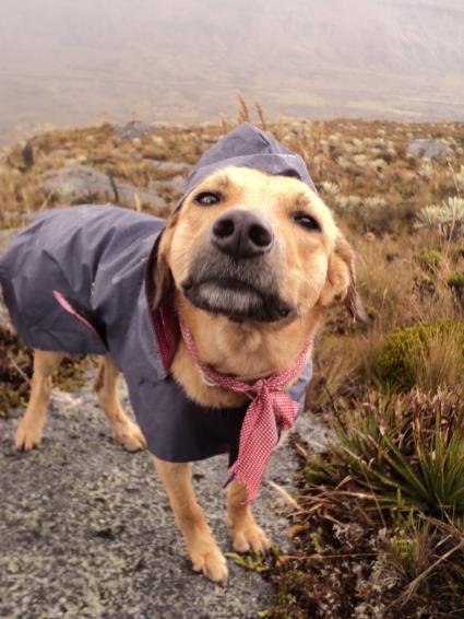 ¿Qué me miran así? :) ¿¿¿Nunca han visto un perro con impermeable???