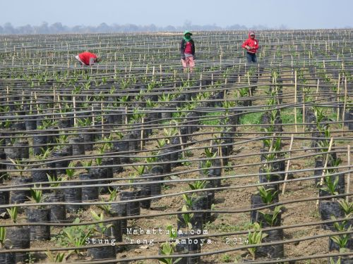 Plantadoras de palma, ellas fueron las que nos llevaron por el buen camino...