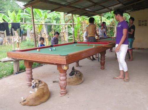 Igual que Linda, los perros camboyanos buscan la sombra mientras los demas juegan