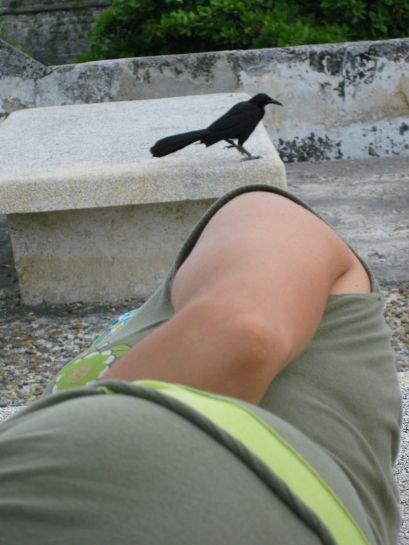 Siesta sobre la muralla flanqueada por mi madre y un ejemplar -macho- de María Mulata: el único pájaro del mundo que tiene nombre y apellido y en el que el nombre femenino abarca a ambos sexos ¡Ole por ese paso costeño hacia el equilibrio nominal!